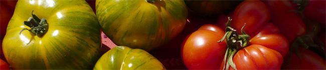 tomato banner