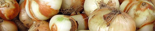 onion header